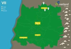 mapa_netland_regiones_VIIregion